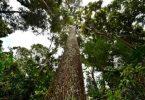 Ormancılık Nedir? Ormancılığın Amacı ve Ormancılık Meslekleri