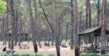 Ormanların Faydaları nelerdir kısaca