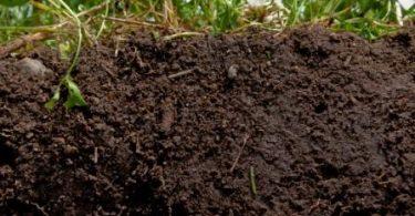 Toprak Nedir? Oluşumu, Yapısı ve Toprak Çeşitleri