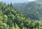 Ormancılığın Türkiye Ekonomisindeki Yeri ve Önemi 6 – Ormancılığın Türkiye Ekonomisindeki Yeri ve Önemi 1