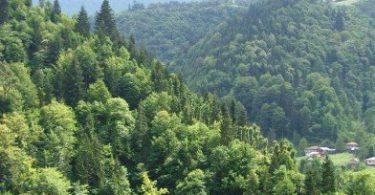 Ormancılığın Türkiye Ekonomisindeki Yeri ve Önemi 1 – Ormancılığın Türkiye Ekonomisindeki Yeri ve Önemi 1