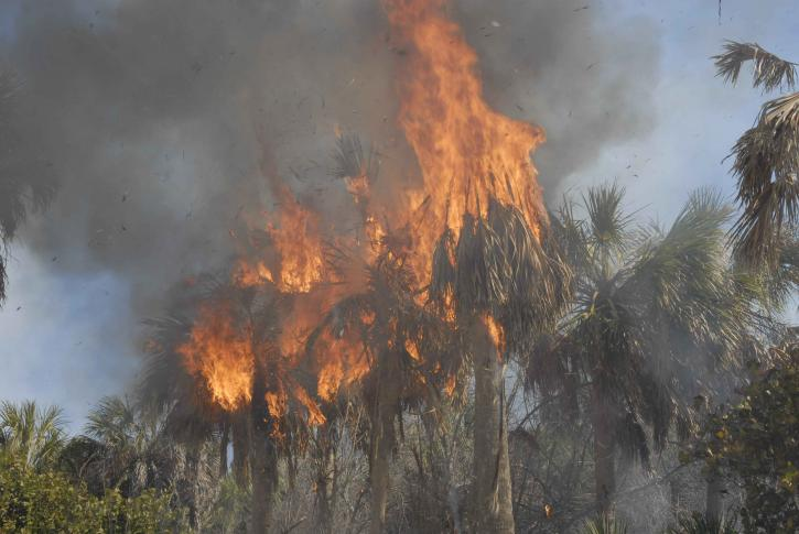 Orman Yangınlarının Nedenleri ve Sonuçları