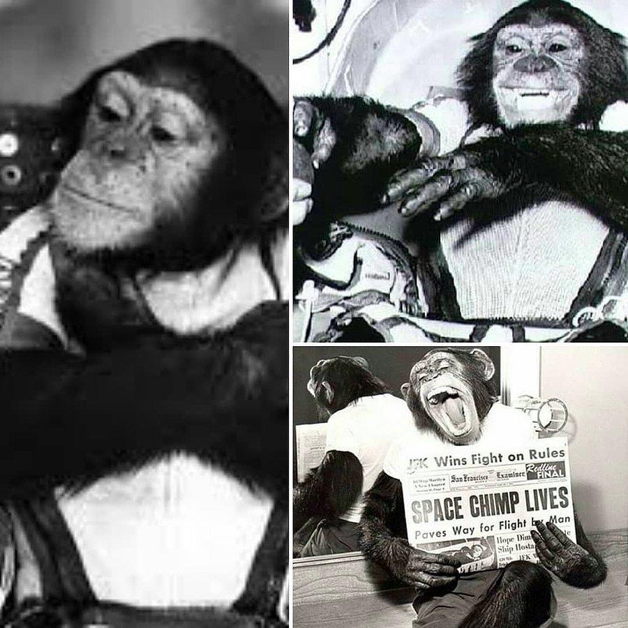 Uzaya İlk Gönderilen Hayvanlar 11 – uzay