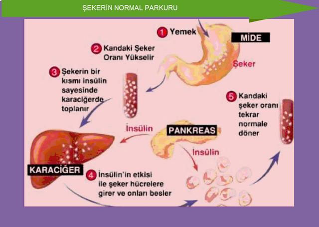 Yararları Saymakla Bitmiyor! 8 – eker yedikten sonra karaciğer