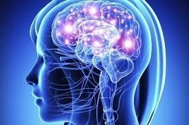 Beyin Sinir Sistemi Nasıl Çalışıyor?