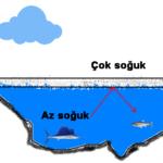Deniz ve Göller Neden Üstten Donar?