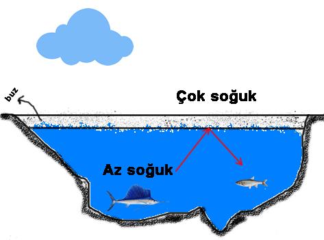 Deniz ve Göller Neden Üstten Donar? 2 – donan göller 1