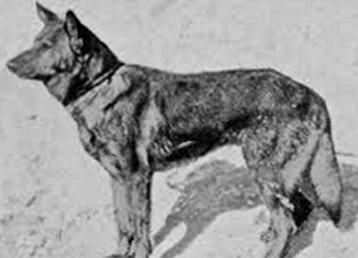 Pilates nedir? Pilates kilo verdirir mi, faydaları nelerdir? 8 – ilk polis köpeği
