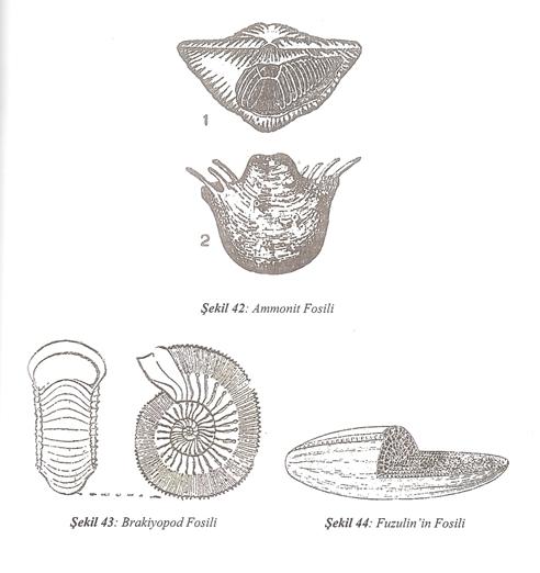Birinci Jeolojik Zaman (Paleozoik) 5 – image 15