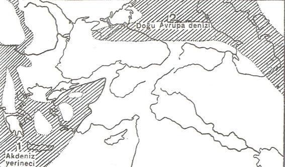 Birinci Jeolojik Zaman (Paleozoik) 8 – image 18