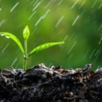 Toprak Kokusunun Kaynağı Nedir?