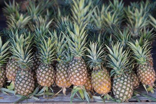 Ananas Yetiştiriciliği, Bakımı ve Toprak Hazırlığı