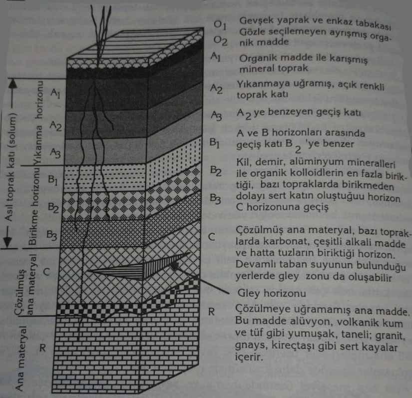Toprağın Katmanları (Horizonları) Nedir? Nasıl Oluşur? 1 – toprağın katmanları