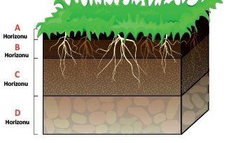 Toprağın Katmanları (Horizonları) Nedir? Nasıl Oluşur?