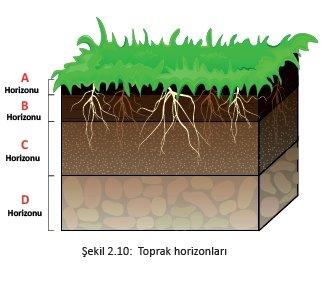 Toprağın Katmanları (Horizonları) Nedir? Nasıl Oluşur? 3 – toprak horizonlari