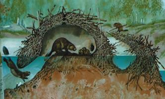 Kunduz Hayvanı ve Yuvaları İle İlgili Bilgiler 1 – Kunduz yuvası