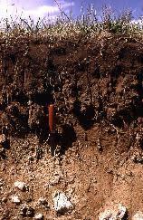 Kırmızımsı Kestane ve Kırmızımsı Kahverengi Toprakların Genel Özellikleri 2 – kırmızımsı kahverengi topraklar