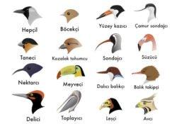 Kuşların Genel Özellikleri Nelerdir? Geniş Kapsamlı Bilgi