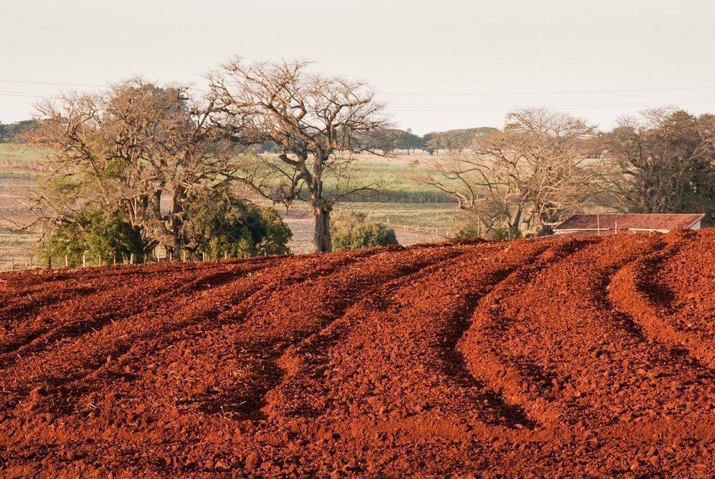 Kırmızımsı Akdeniz Toprağı (Terra Rossa) Nedir? Geniş Kapsamlı Bilgi