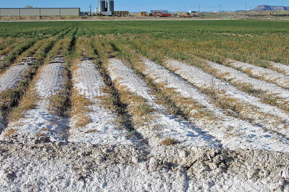 Halomorfik (Tuzlu, Alkali, Sodik) Toprakların Özellikleri 2 – tuzlu sodik topraklar