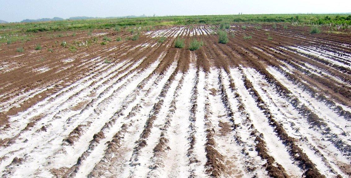 Halomorfik (Tuzlu, Alkali, Sodik) Toprakların Özellikleri 3 – tuzlu topraklar