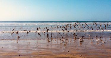 deniz kuşları
