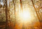 doğal ve yapay ışık kaynakları