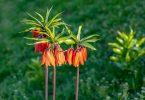 türkiyedeki endemik bitkiler