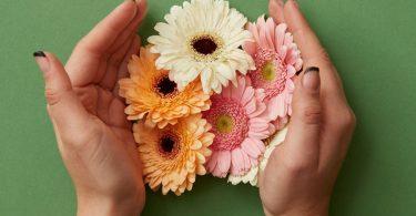 gerbera çiçeğinin