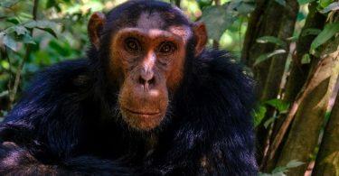 primat nedir